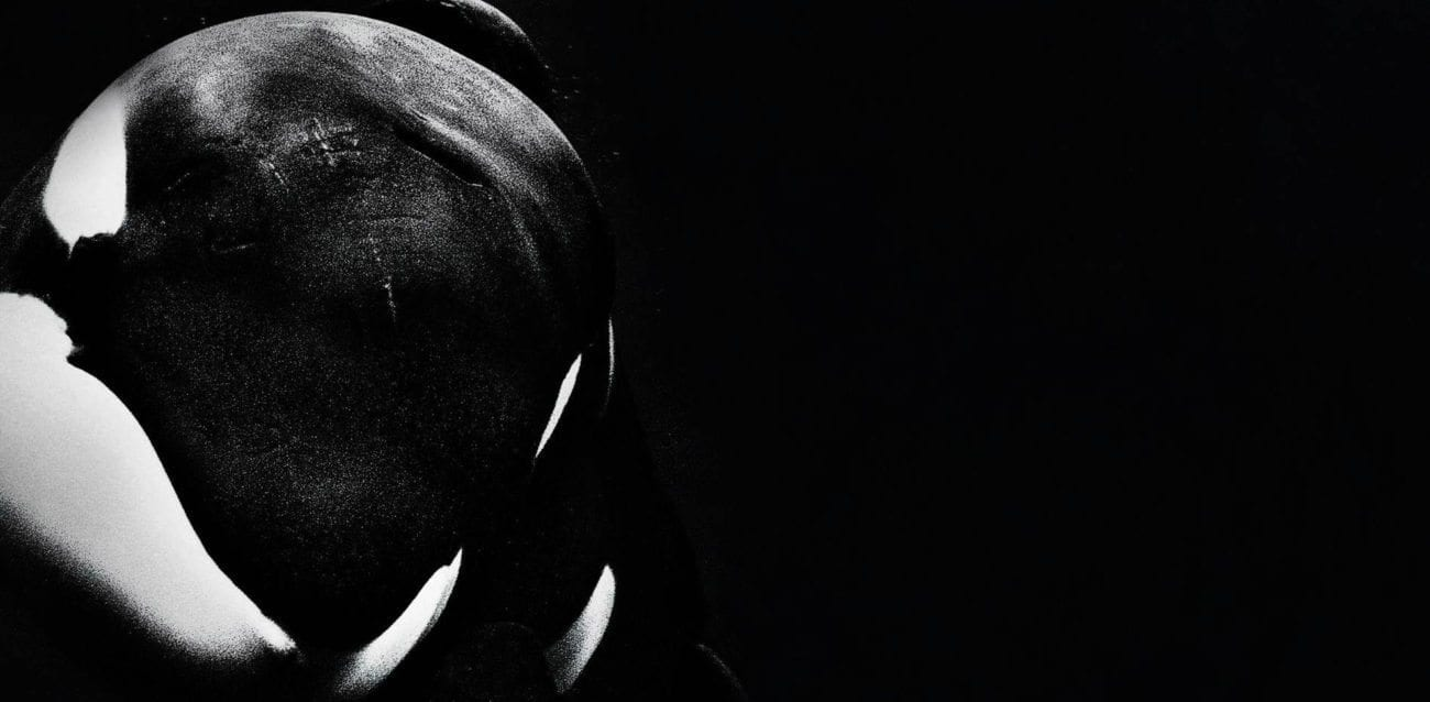 Should 'March of the Penguins 2: The Next Step' give you a taste for more animal magic, here are ten essential animal documentaries to bingewatch next.