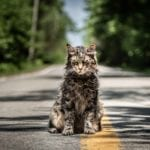 This has become Stephen King's world: y'all can now see the 'Pet Sematary' remake from Dennis Widmyer & Kevin Kolsch.