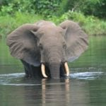 Today we're profiling the amazing documentary 'Silent Forests', which takes you to the front lines of central Africa's battle to save forest elephants.