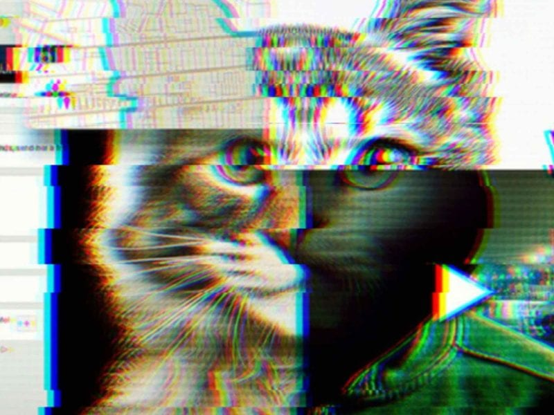 One of the big Netflix docuseries making a resurgence is 'Don't F*** with Cats: Hunting an Internet Killer'. Here's why you shouldn't F with cats.